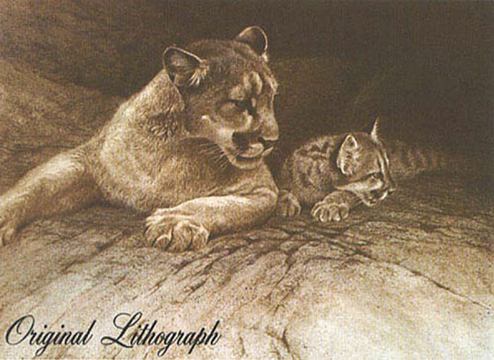 Robert Bateman Cougar and Kit Original Lithograph