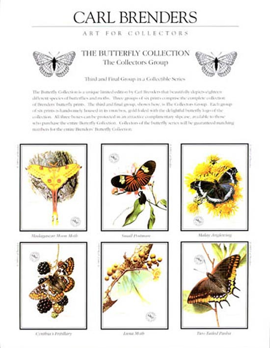 Carl Brenders Butterfly Collection Collecters