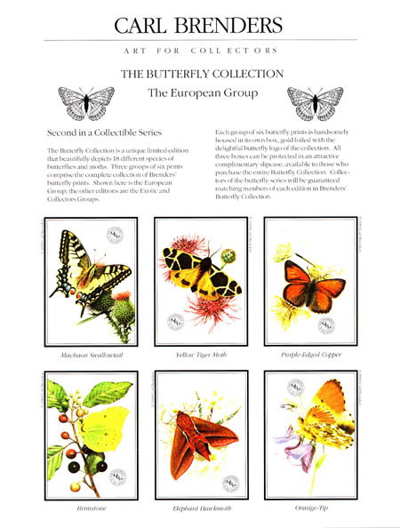 Carl Brenders Butterfly Collection European