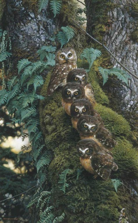 Carl Brenders The Family Tree Owls