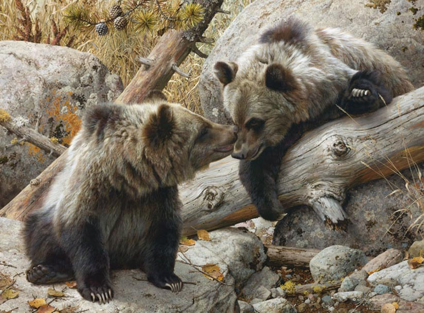 Carl Brenders Alaska Chat Grizzly Bears