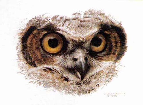 Carl Brenders Great Horned Owl Study