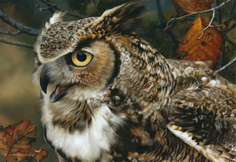 Carl Brenders In Focus Great Horned Owl