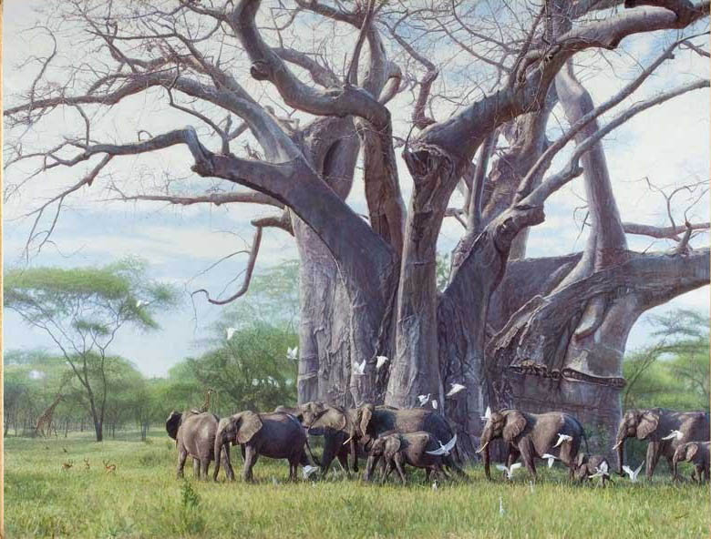 John Banovich A Giant Among Giants Elephants