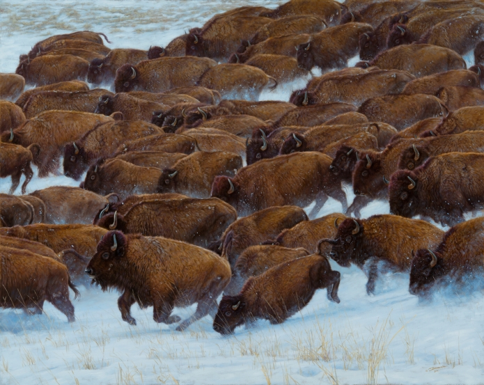 john banovich buffalo run
