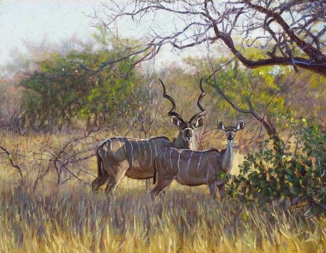 John Banovich Kudu In The Lowveld