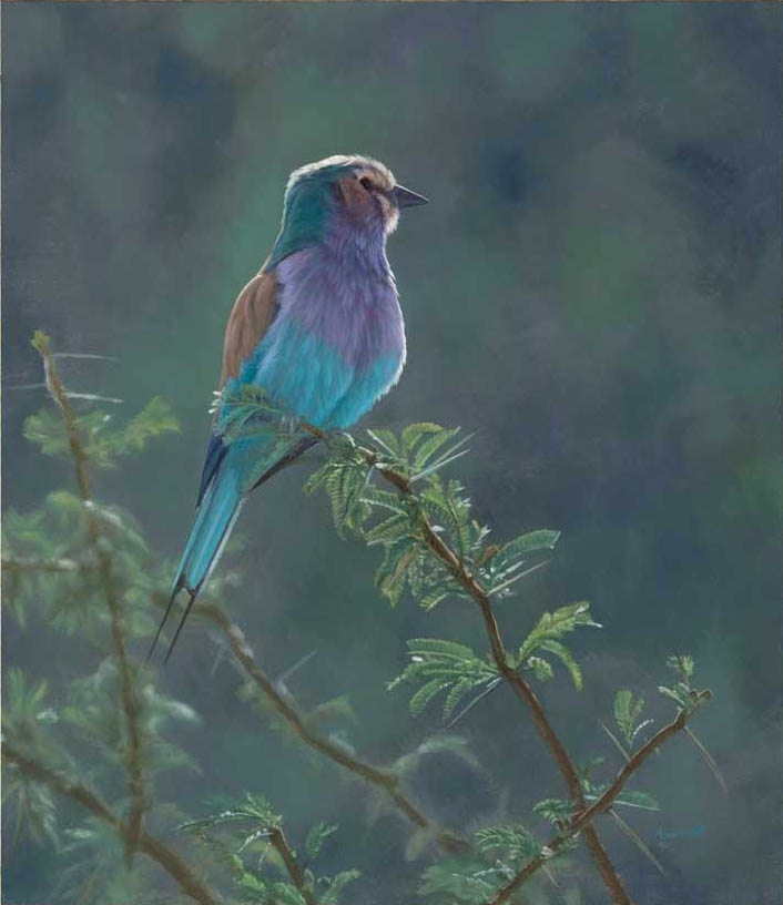 John Banovich Lilac Breasted Roller