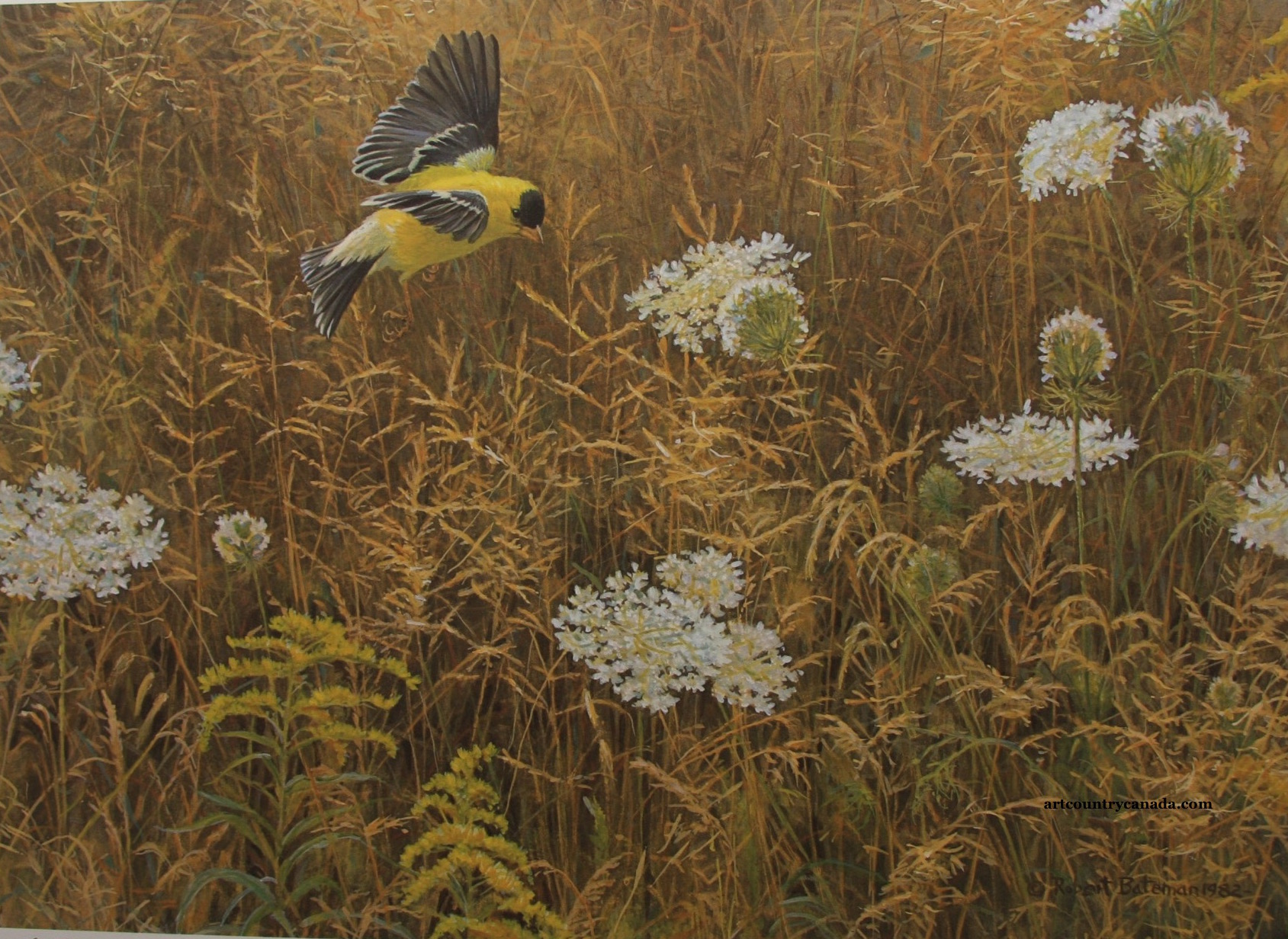 Robert Bateman Queen Anne's Lace and American Goldfinch