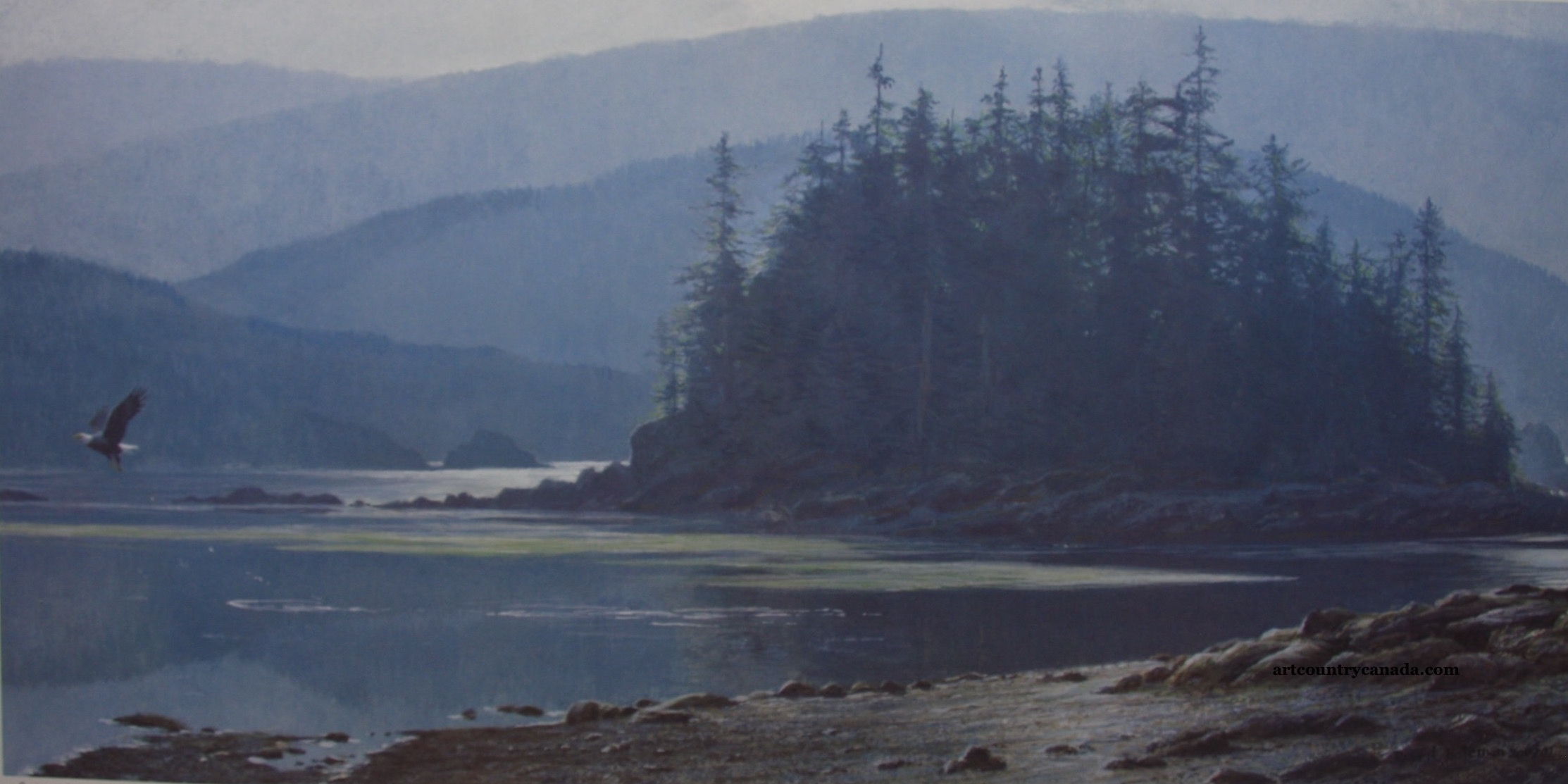 Robert Bateman Along The Coast Bald Eagle