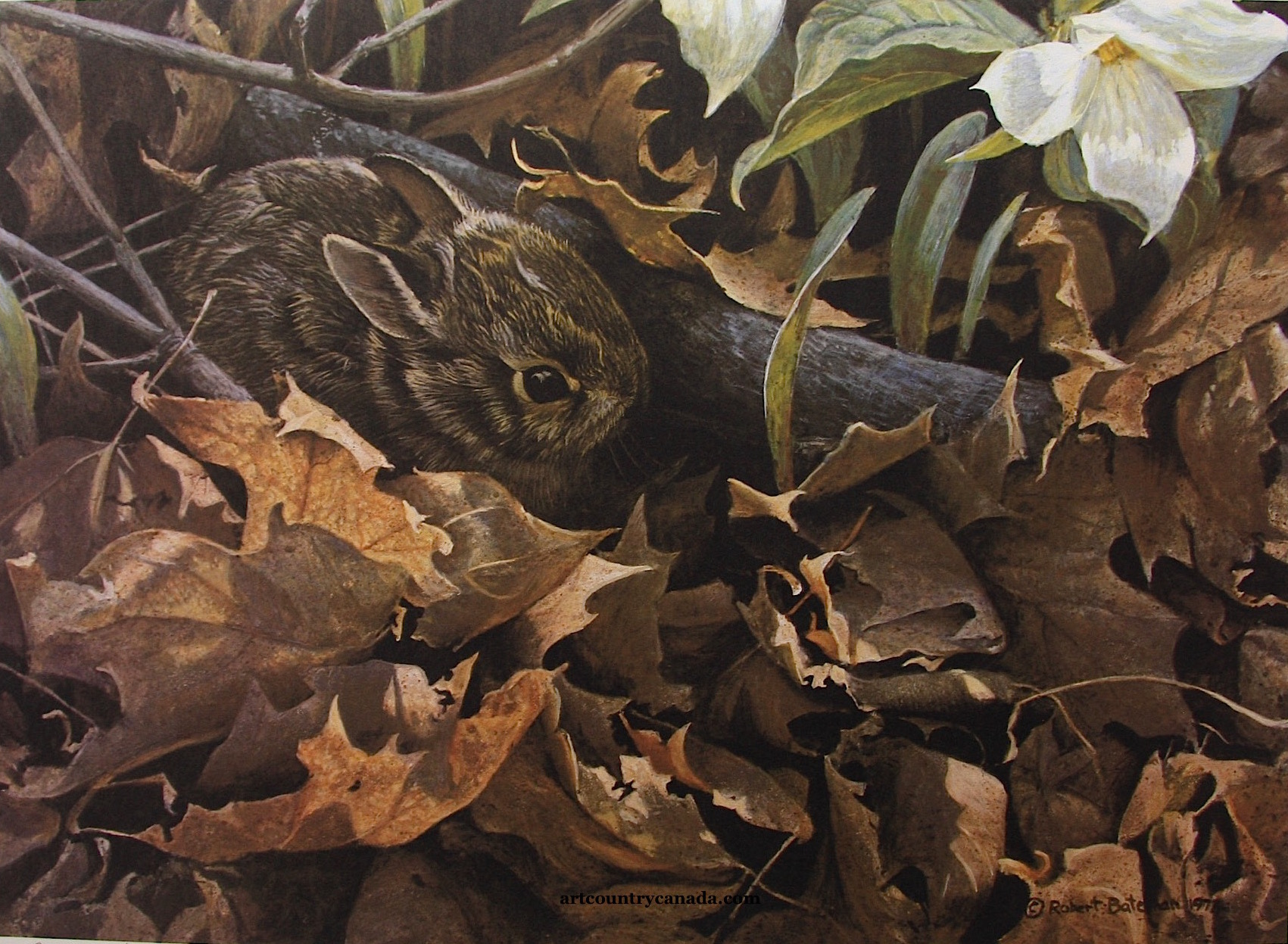 Robert Bateman Among The Leaves Cottontail Rabbit