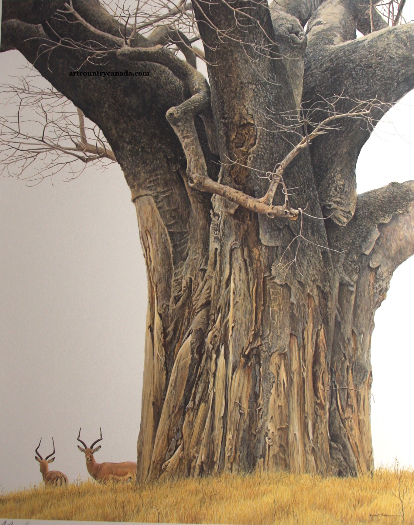 Robert Bateman Baobab Tree and Impala