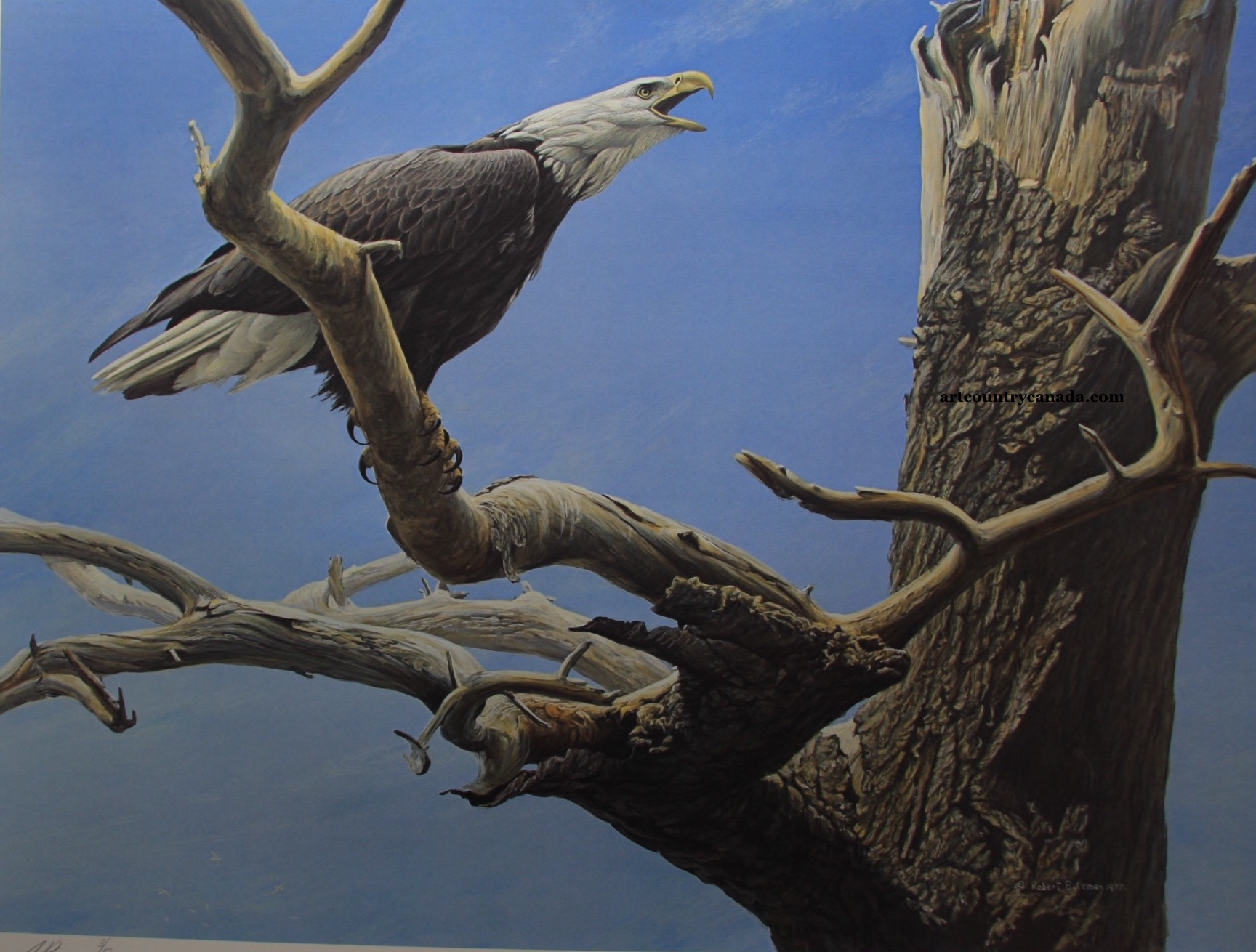 Robert Bateman Call Of The Wild Bald Eagle