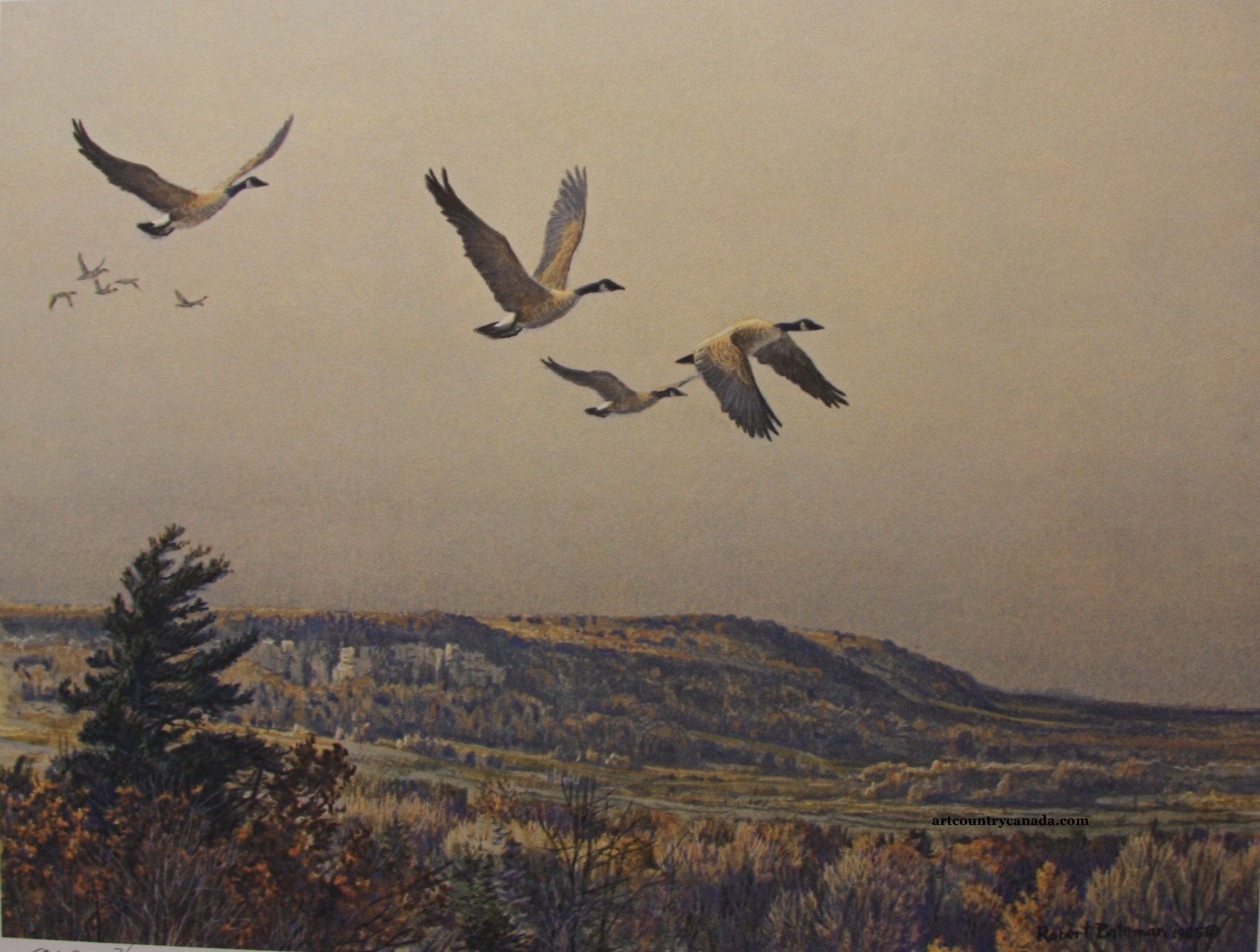 Robert Bateman Canada Geese Over The Escarpment