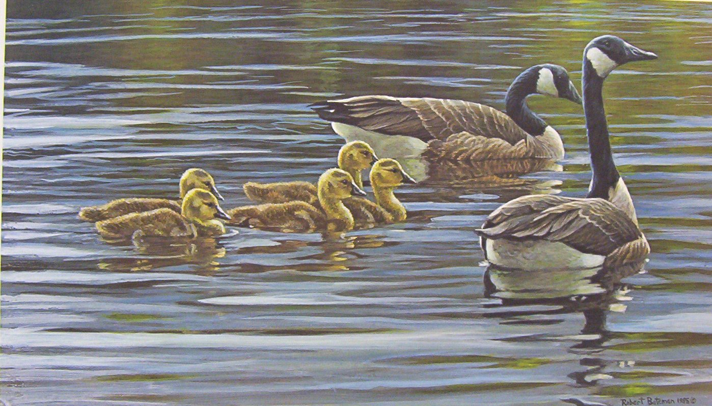Robert Bateman Canada Goose with Young