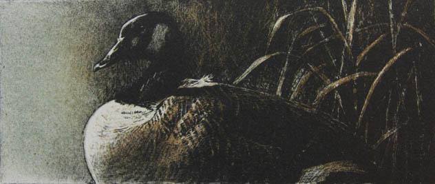 Robert Bateman Canada Goose Original Lithograph