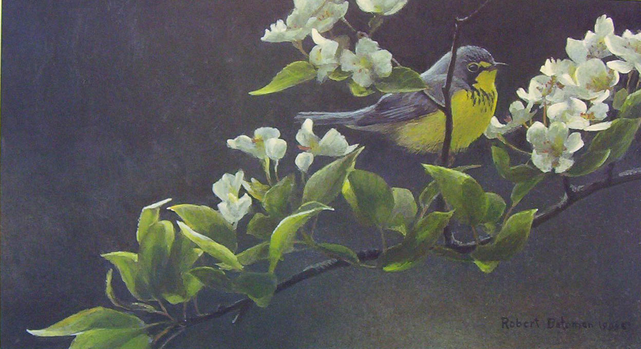 Robert Bateman Canada Warbler And Pear Blossoms