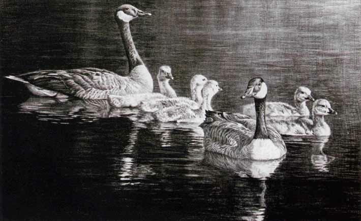 Robert Bateman Canada geese family