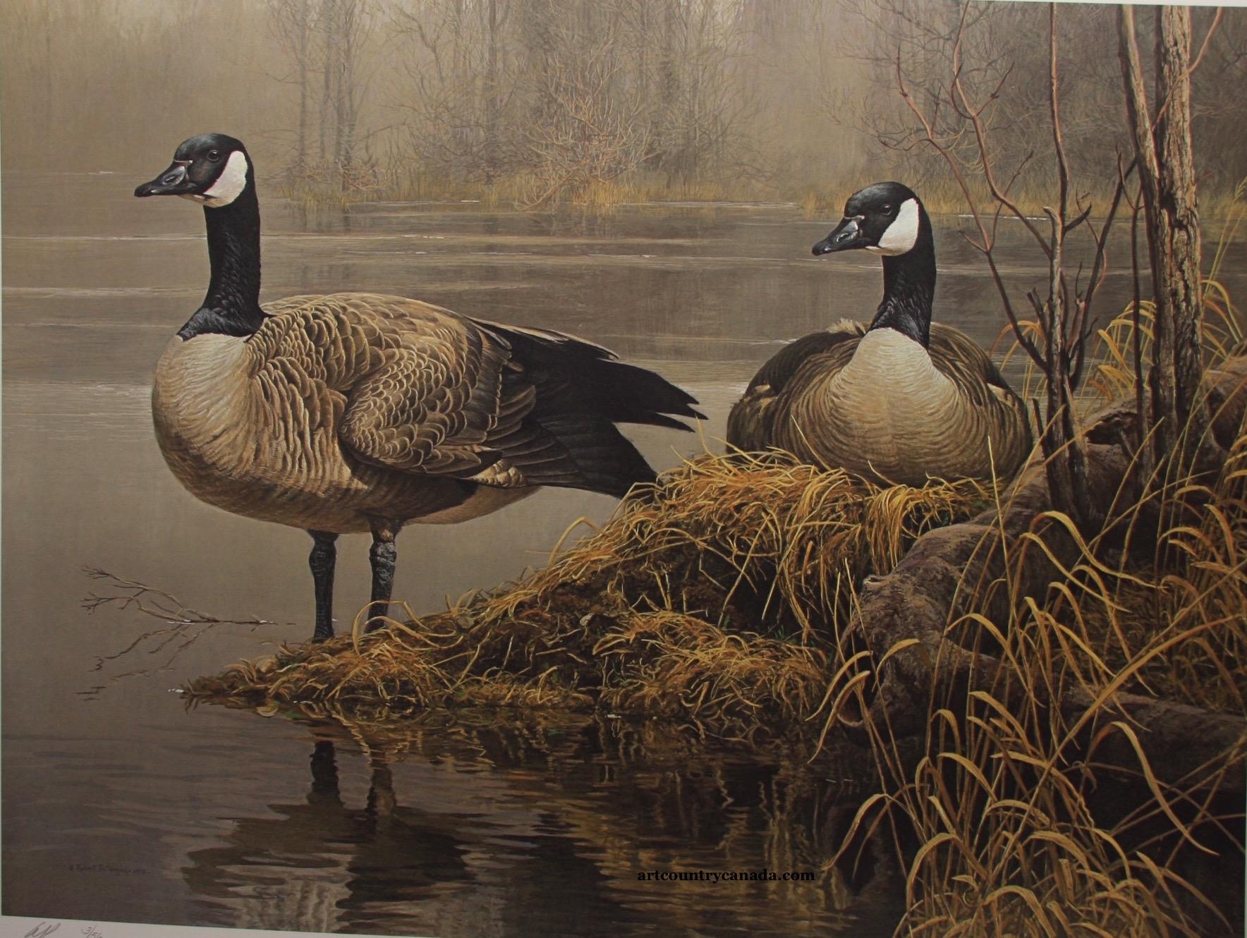 Robert bateman canada Geese Nesting