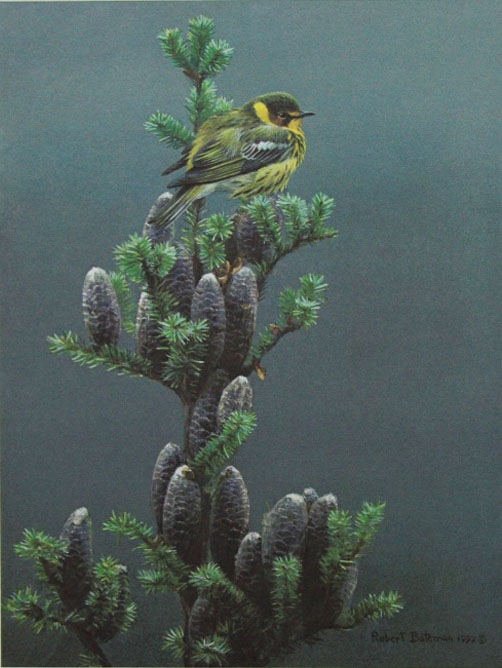 Robert Bateman Cape May Wrabler Balsam