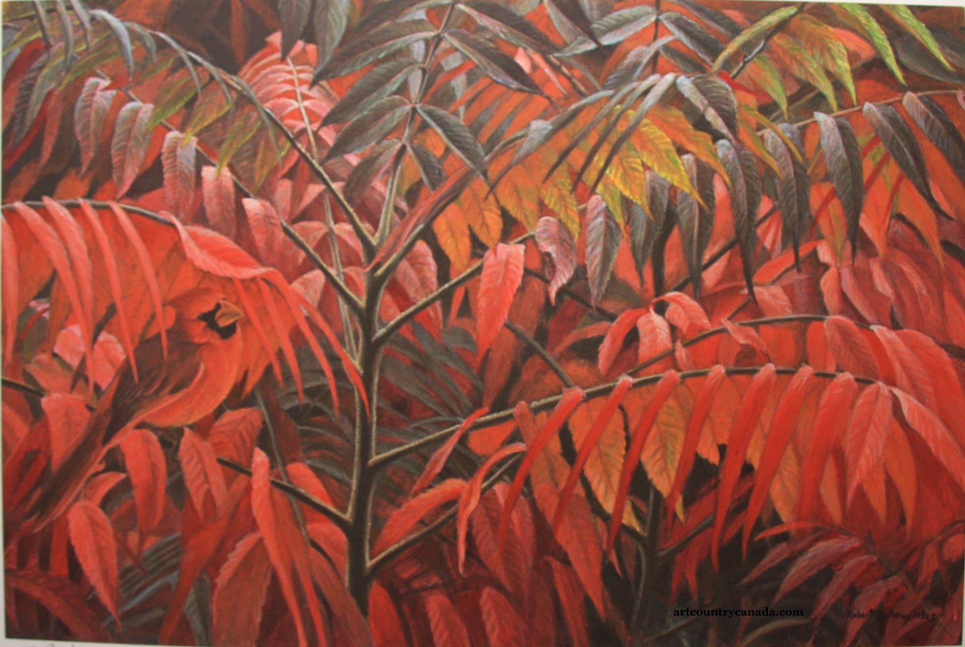 Robert Bateman Cardinal And Sumac