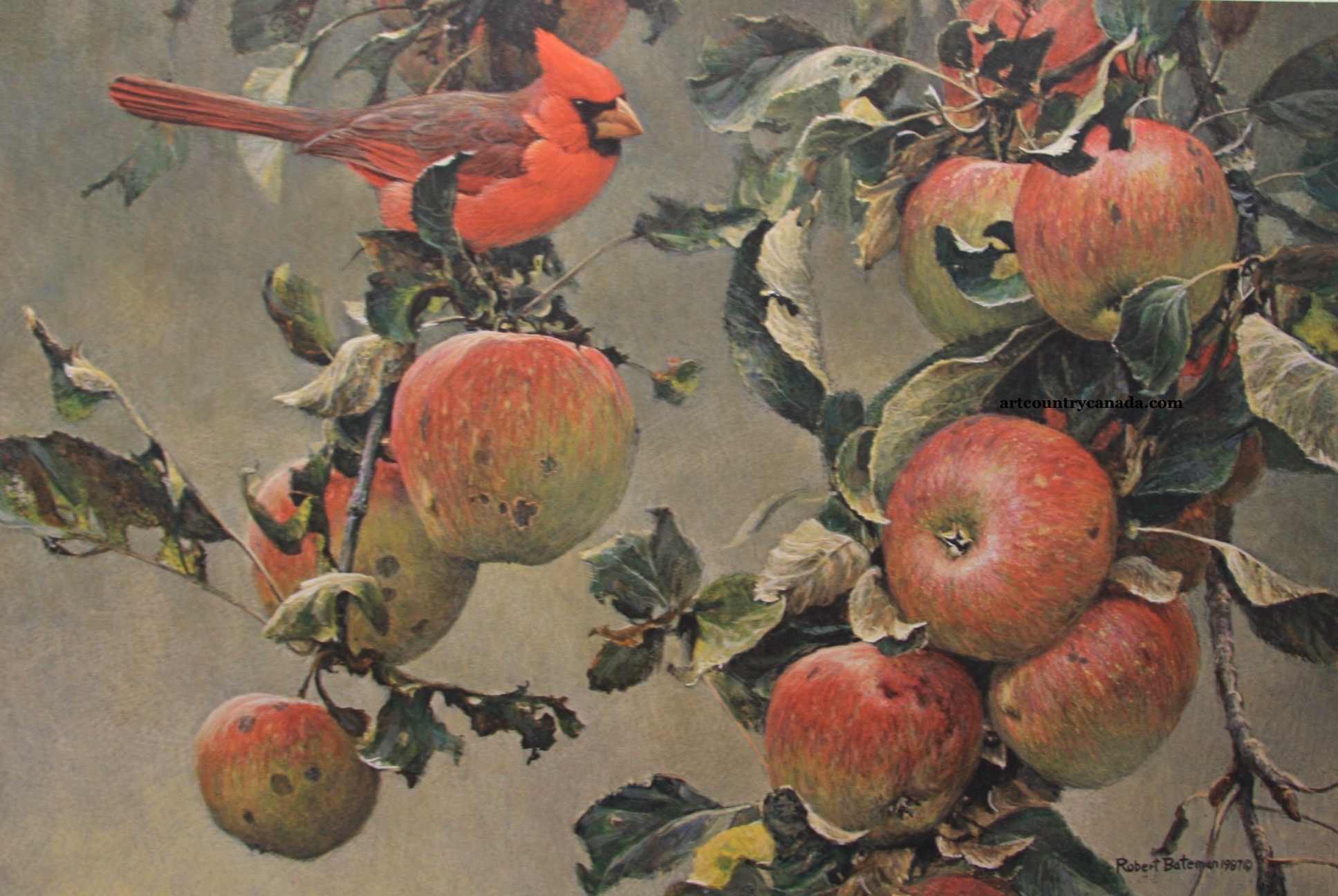 Robert Bateman Cardinal And Wild Apples