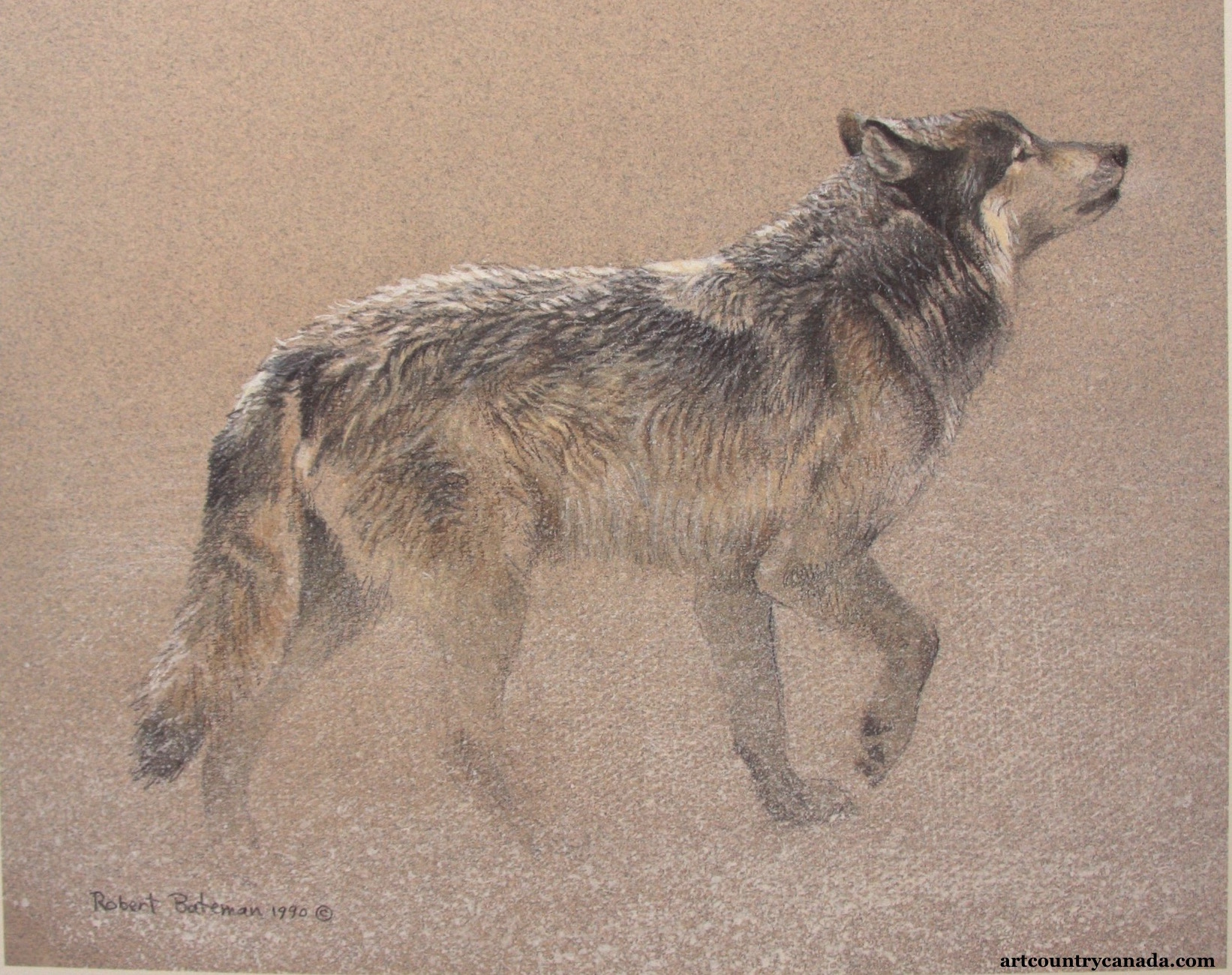 Robert Bateman Catching The Scent
