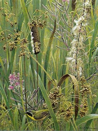 Robert bateman Cattails Fireweed, yellowthroat
