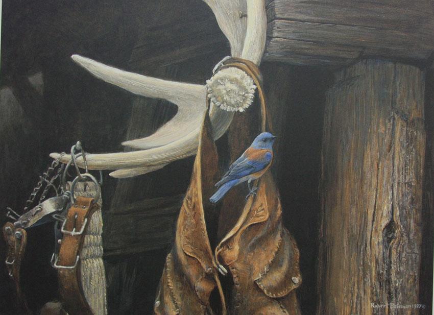 Robert Bateman Chaps Western Bluebird