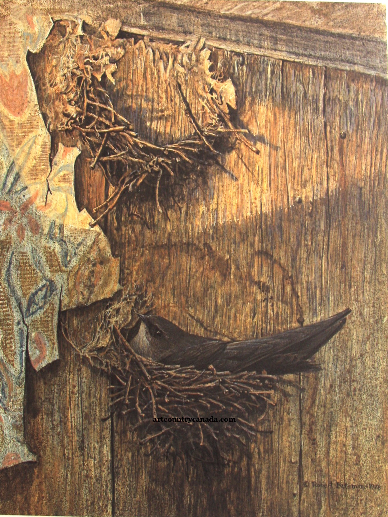 Robert Bateman Chimney Swift On Nest