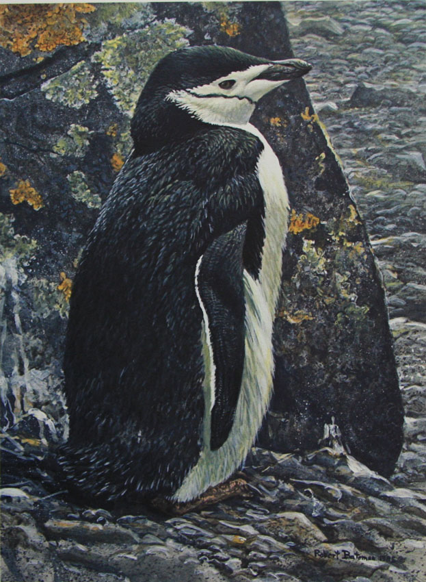 Robert Bateman Chinstrap Penguin