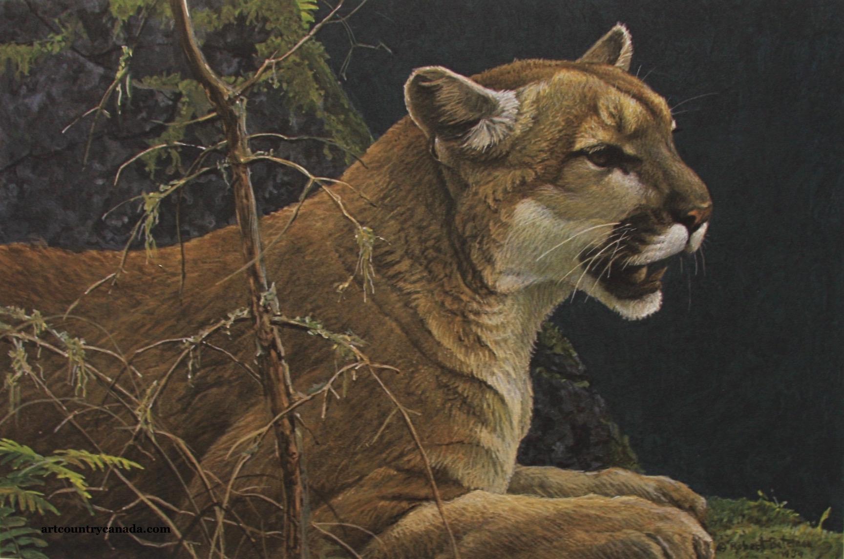Robert Bateman Cougar Portrait
