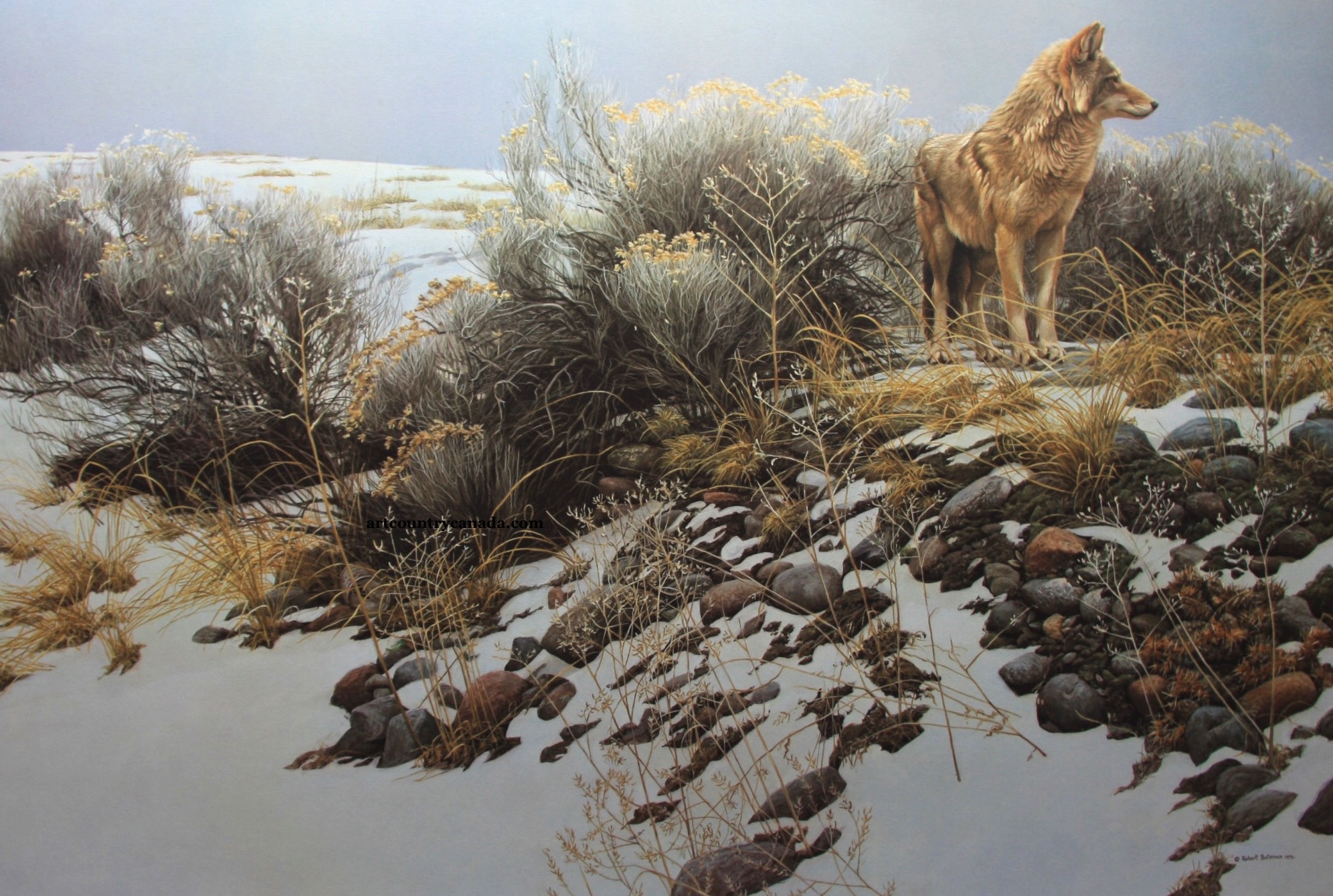 Robert Bateman Coyote and Winter Sage