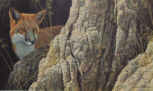 Robert Bateman Curious Glance