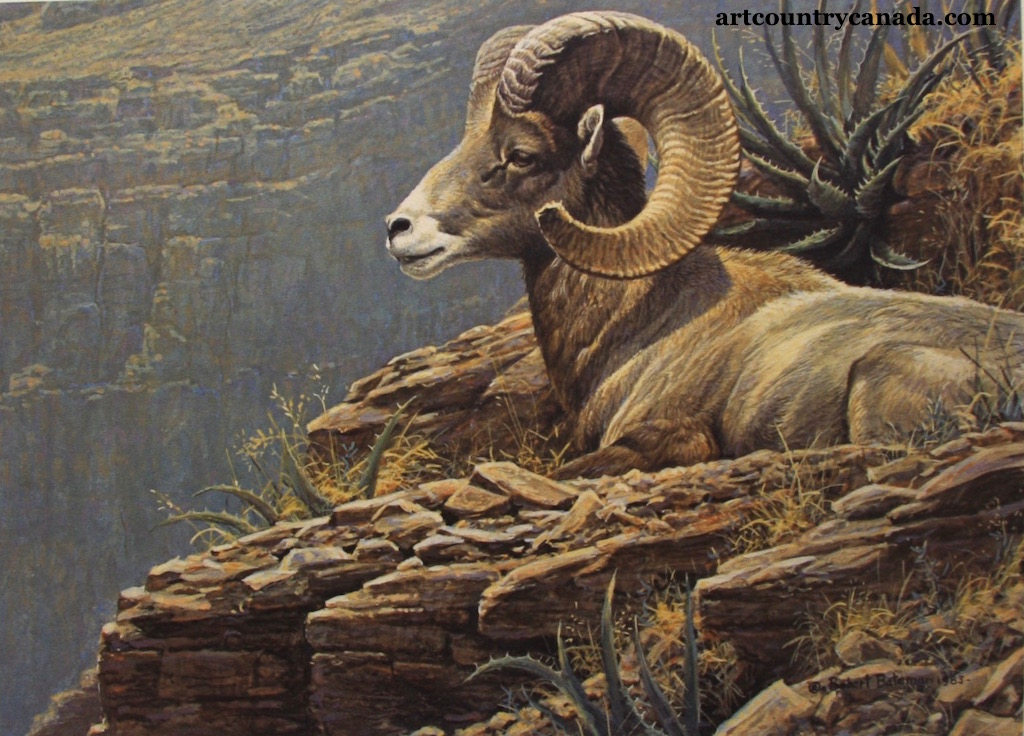 Robert Bateman Desert Bighorn Sheep