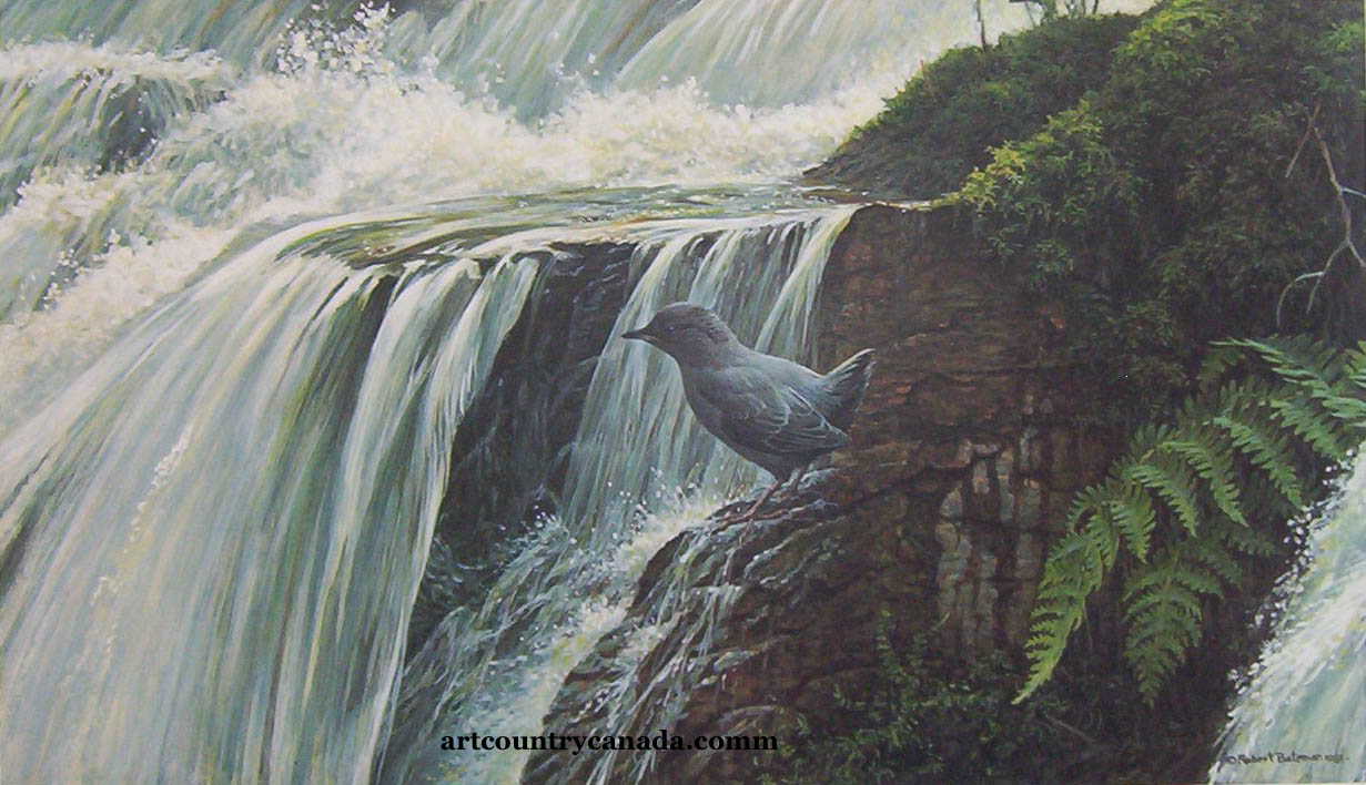 Robert Bateman Dipper By The Waterfall
