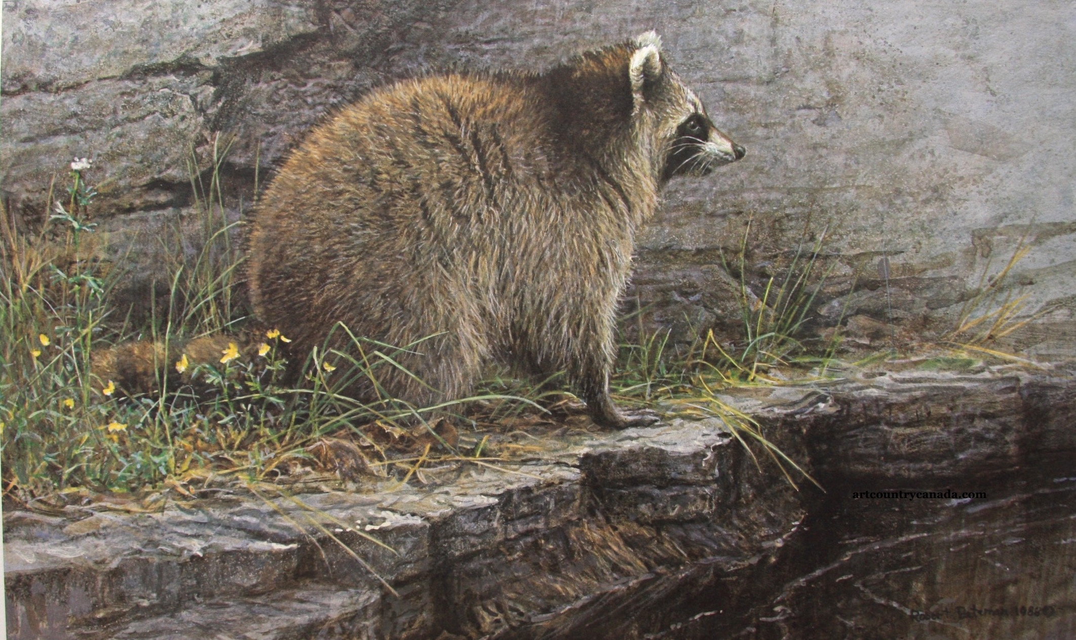 Robert Bateman Distant Danger Raccoon
