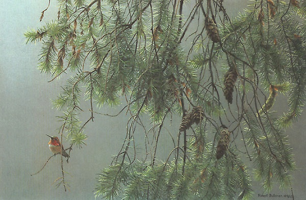 Robert Bateman Douglas Fir and Rufous Hummingbird