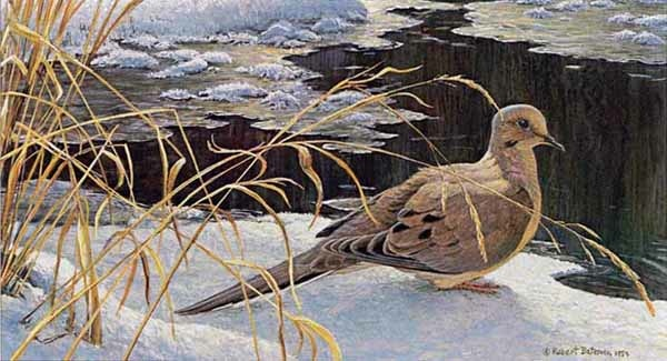 Robert Bateman Down For A Drink Mourning Dove