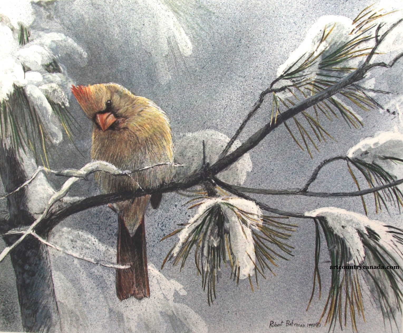Robert Bateman Cardinal and Sumac Female Cardinal