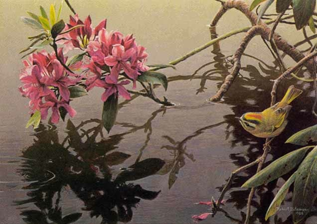 Robert Bateman Golden-Crowned Kinglet and Rhododendron