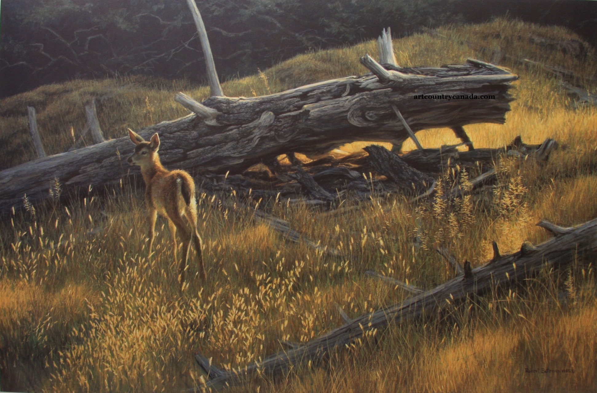 Robert Bateman Golden Light Black-Tailed Fawn