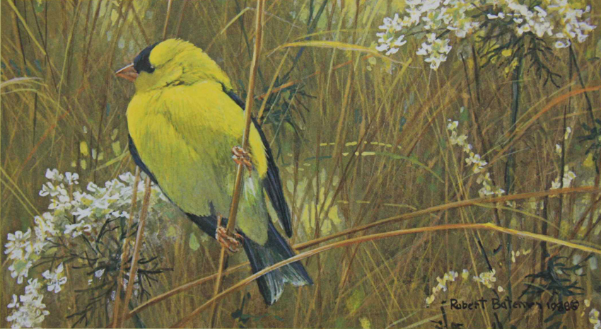 Robert Bateman Goldfinch In The Meadow