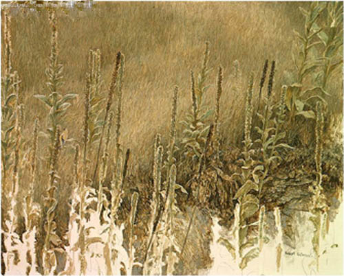 Robert bateman Goldfinch with Mullein