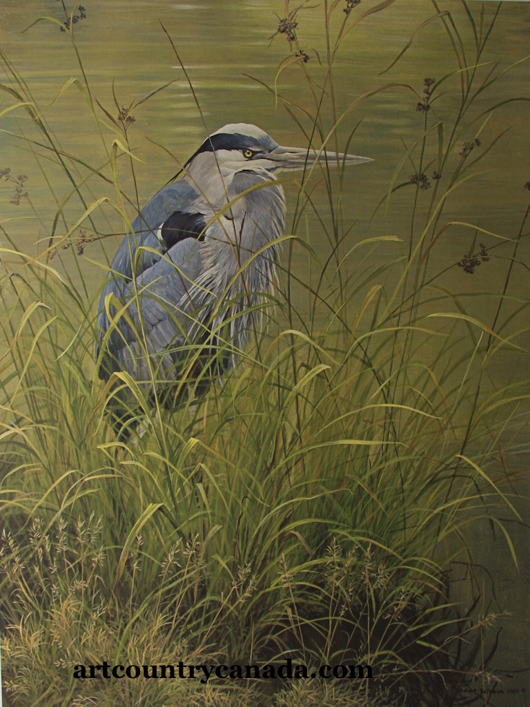 Robert Bateman Grassy bank Blue HeronH