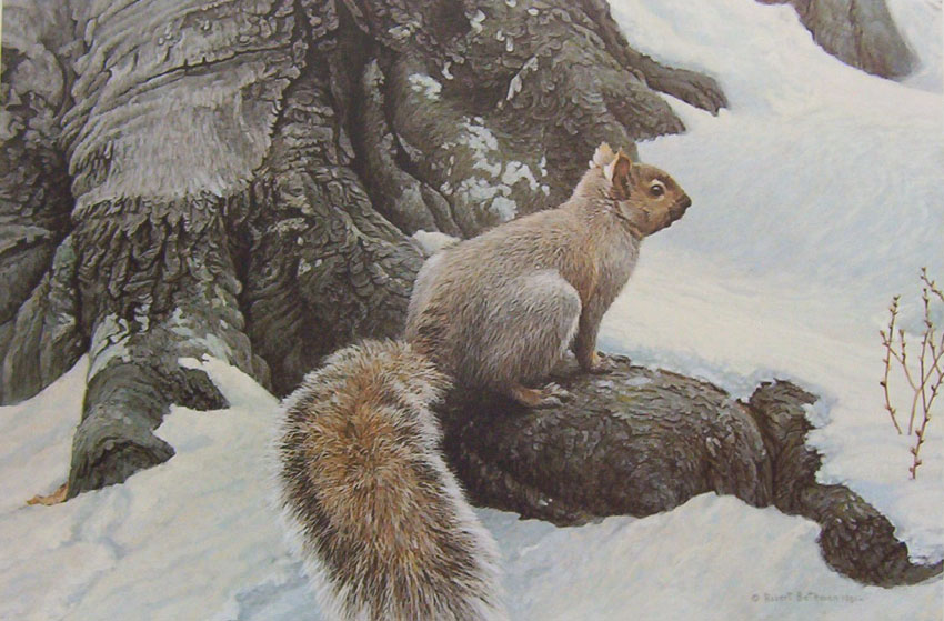 Robert Bateman Gray Squirrel