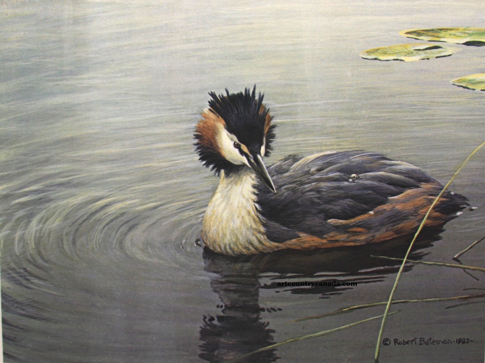 Robert Bateman Great-Crested Grebe