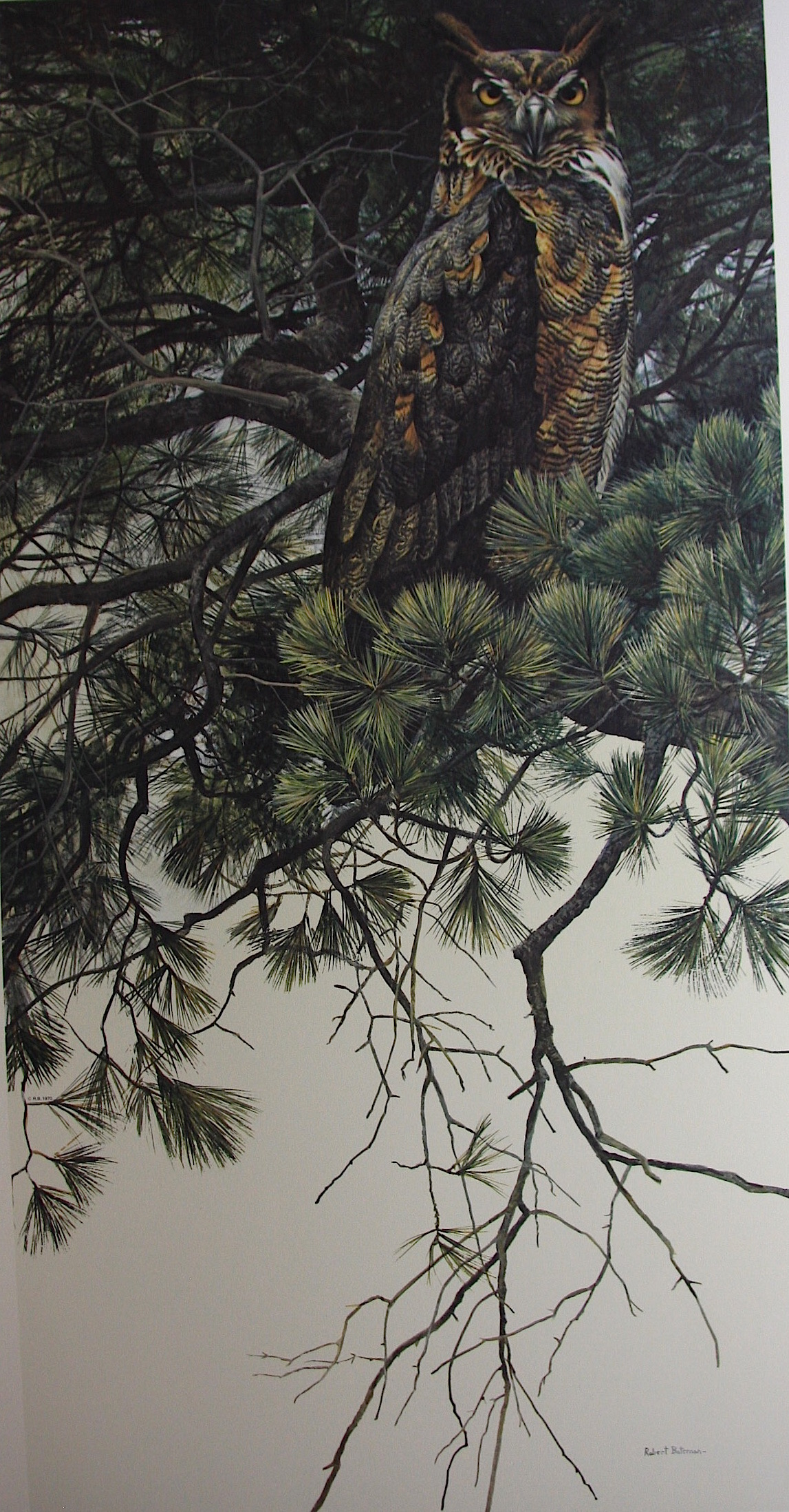 Robert Bateman Great Horned Owl In White Pine