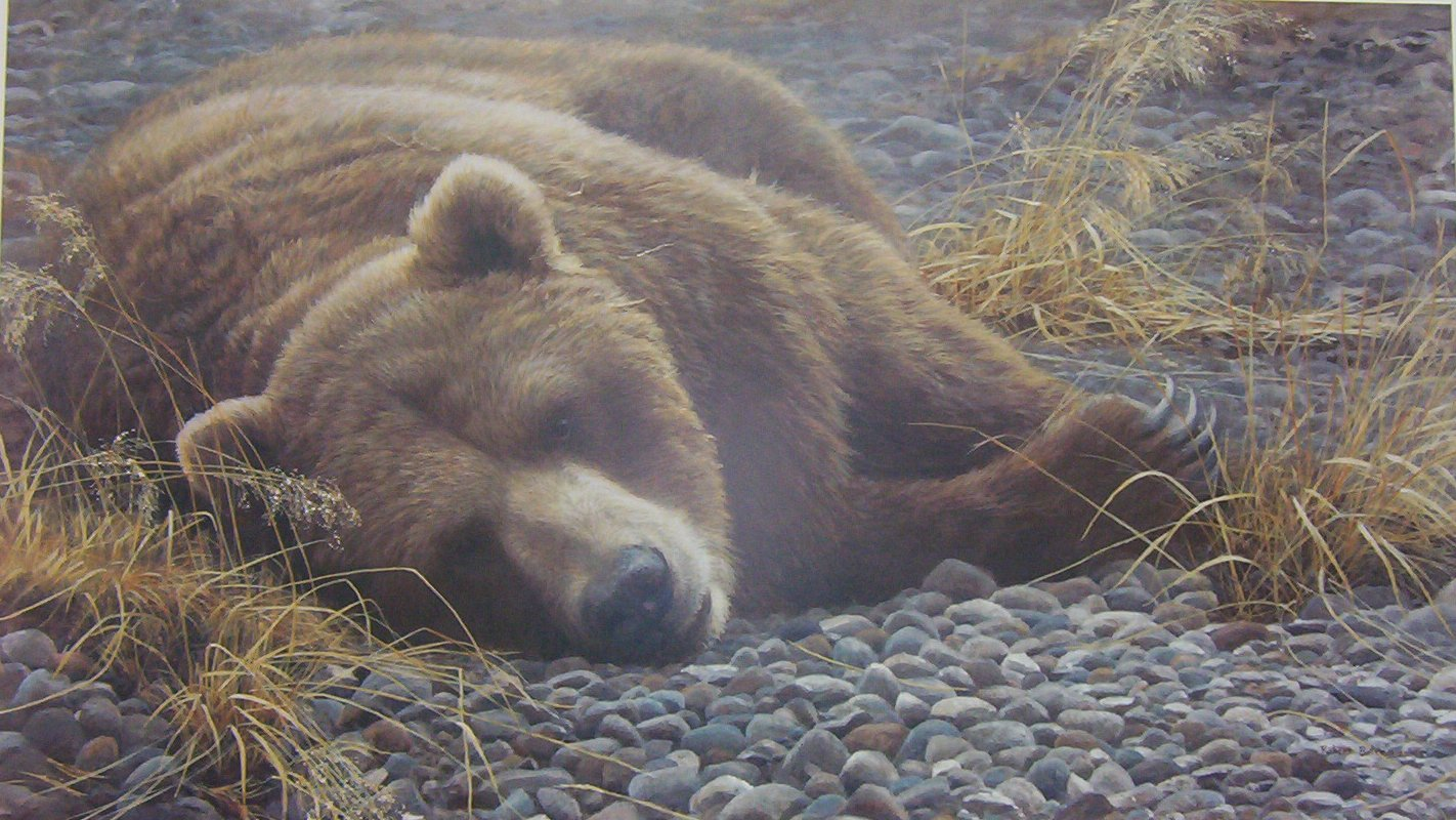 Robert Bateman Grizzly Bear at Rest