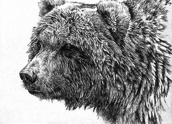 Robert Bateman Grizzly Bear Etching