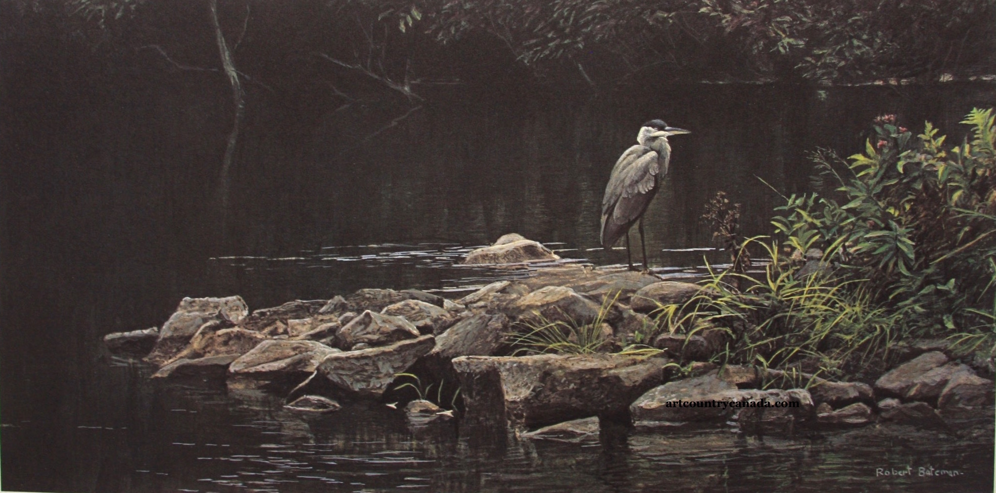 Robert bateman Heron On The Rocks